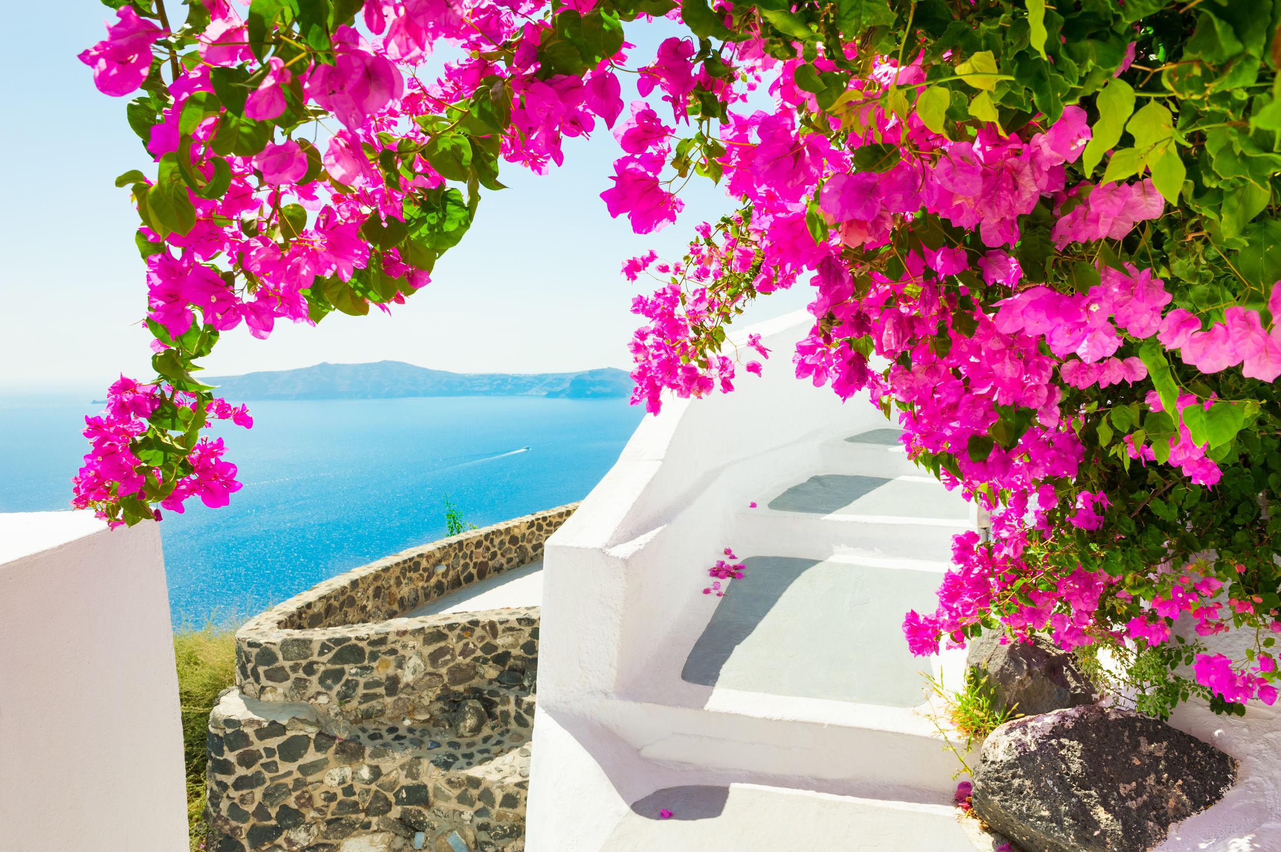Beautiful terrace with pink flowers on Santorini island, Greece